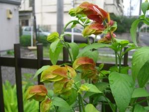 2010_0709_095611cimg0001