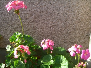 2011_0105_142954cimg3777