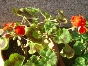 2011_0105_143039cimg3779