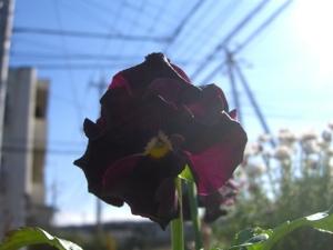 2011_0113_115057cimg3980