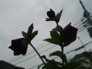 2011_0301_111549cimg5098