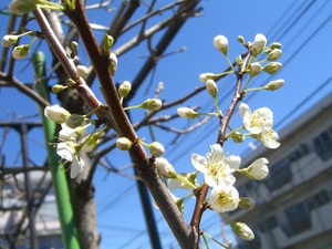2011_0327_113040cimg5752