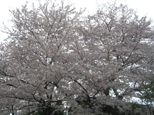 2011_0410_102845cimg6036