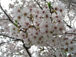 2011_0410_102939cimg6038