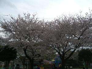 2011_0410_173100cimg6067