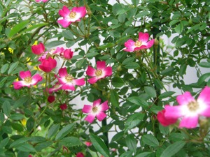 2011_0527_140840cimg7313