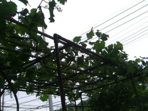 2011_0607_151554cimg7301