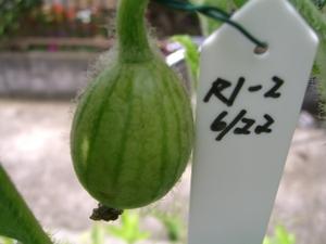 2011_0624_115036cimg7601