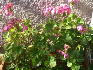 2012_0126_135137cimg0011