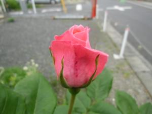 2012_0512_124600cimg1511